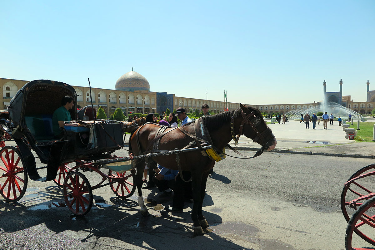 Horses with carriages on the Imam Square in Esfahan, Iran