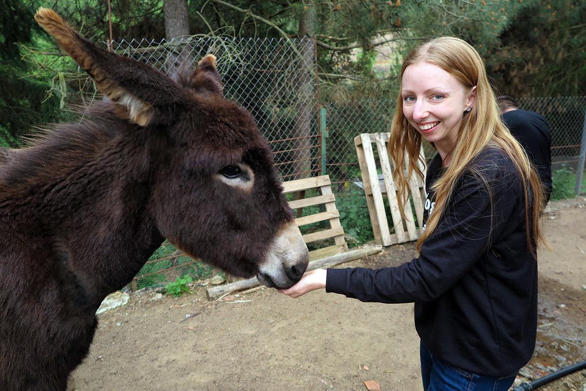 A donkey belonging to Can Nan Vila, Arbucies, Spain