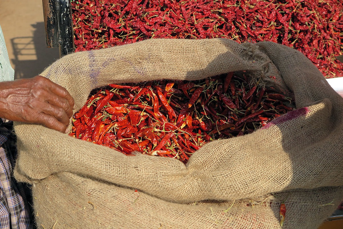 chilli India