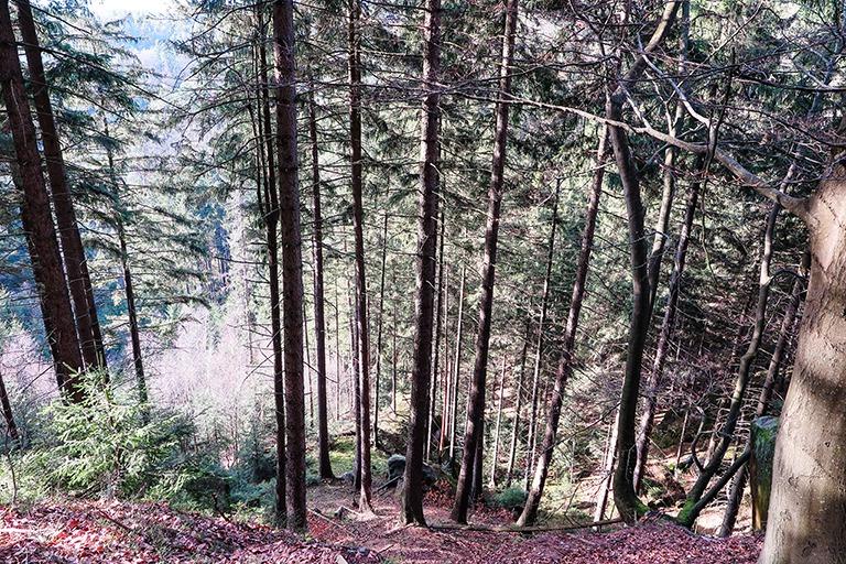 Climbing to the top of Šaunštejn, the Bandits' keep