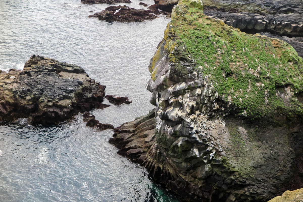 Closeup of basalt bird cliffs at Thufubjarg, largely dominated by seagulls, in Snaefellsness Peninsula, West Iceland