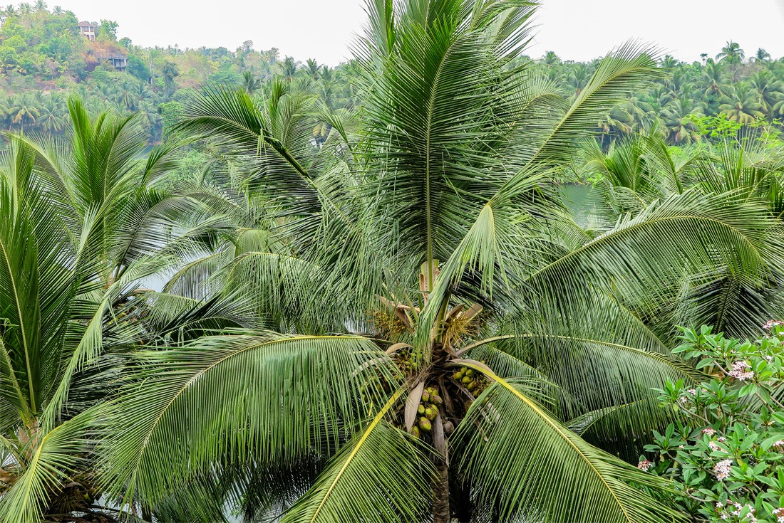 Lush greenery in Kerala, India
