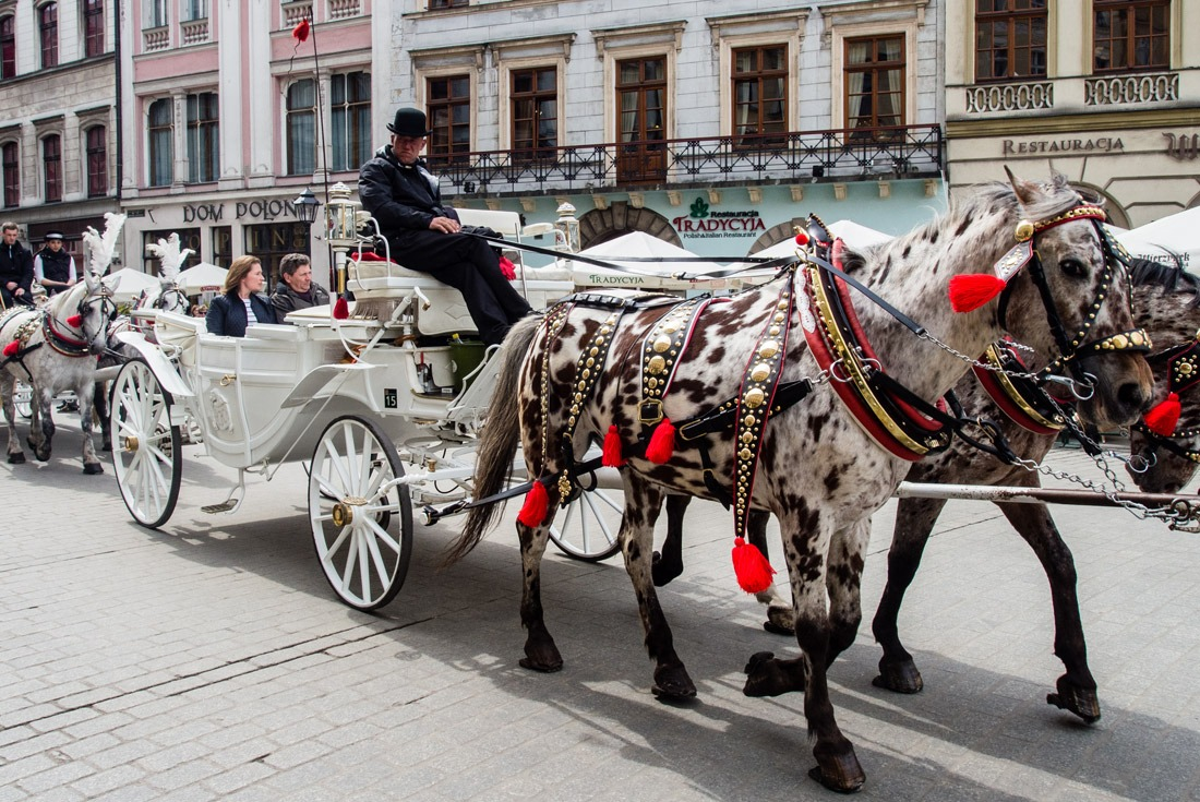 Horses in Krakow, Poland