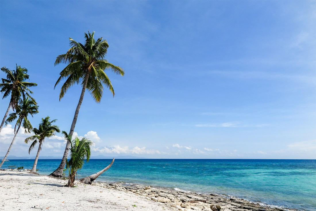 Coconut palms of Kalanggaman Island, Philippines