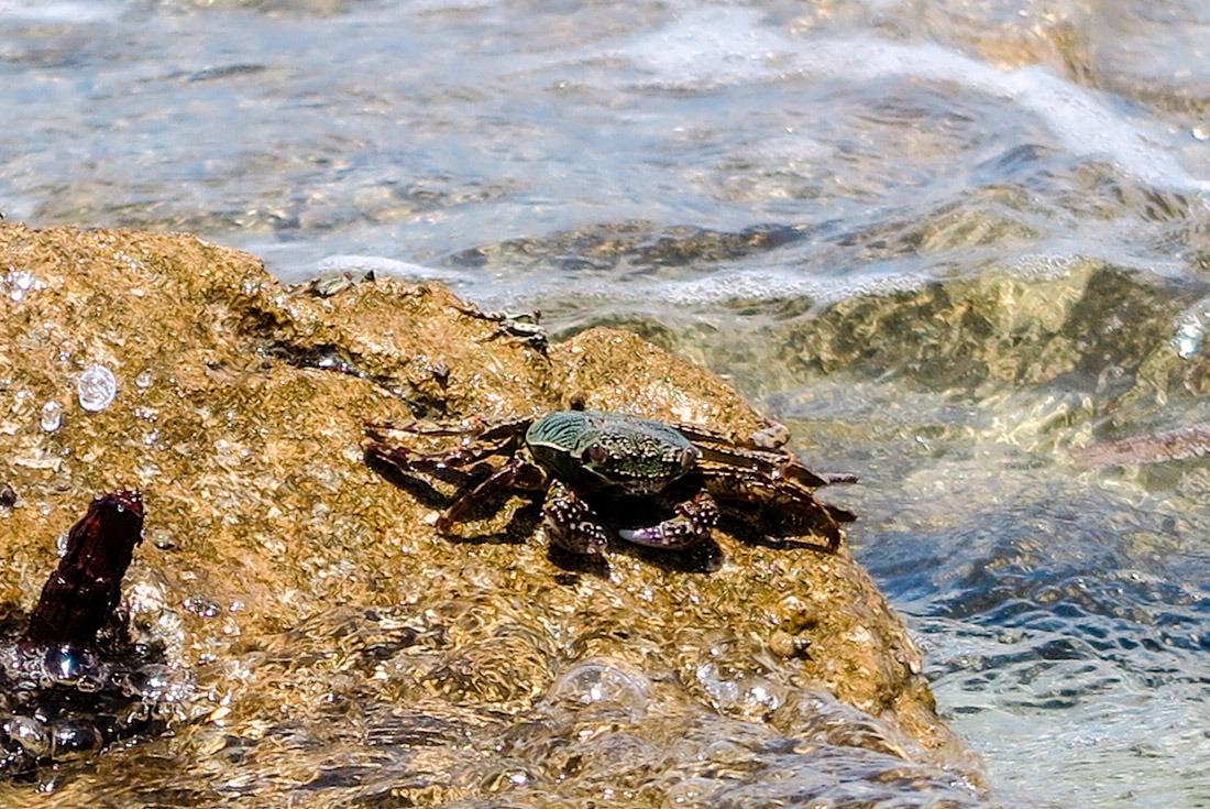 A crab on Kalanggaman Island