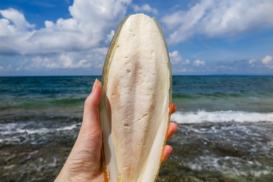 A sepia bone found on Kalanggaman Island