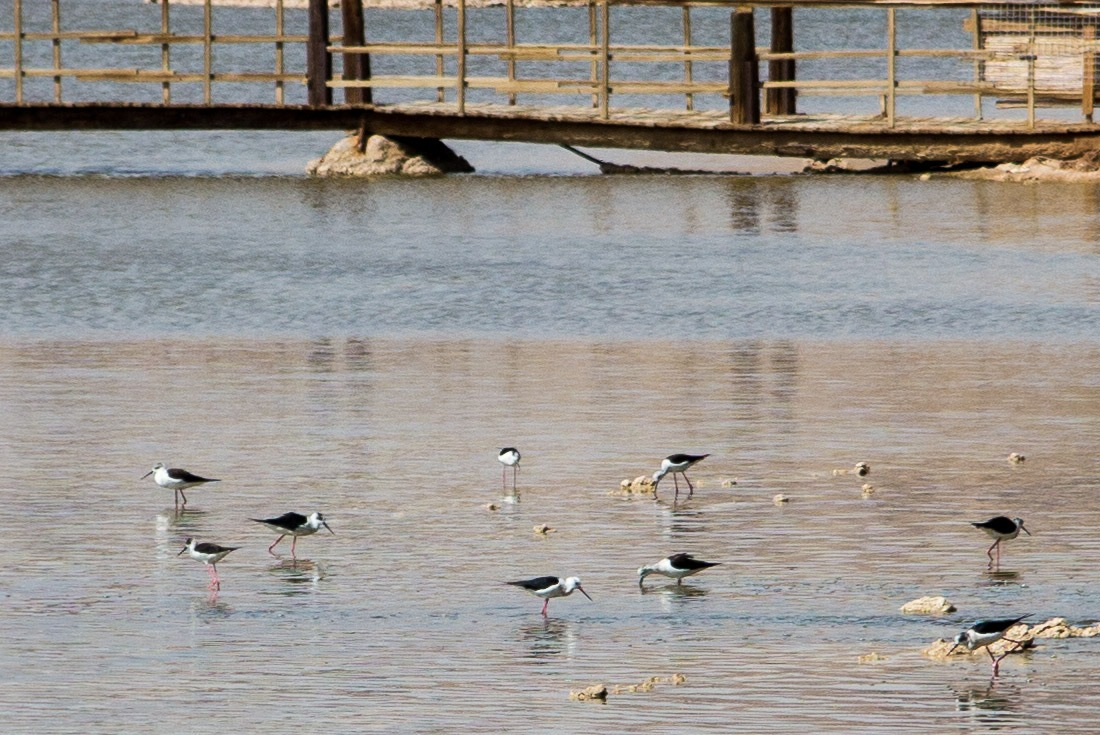 Birds feeding in Eilat's International Birding & Research Centre