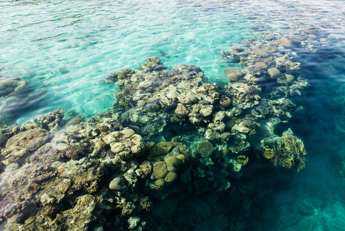 Coral reef in Coral Beach Nature Reserve Eilat