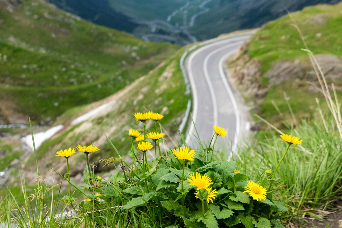 Flowers and beautiful views along Transfagarasan Road