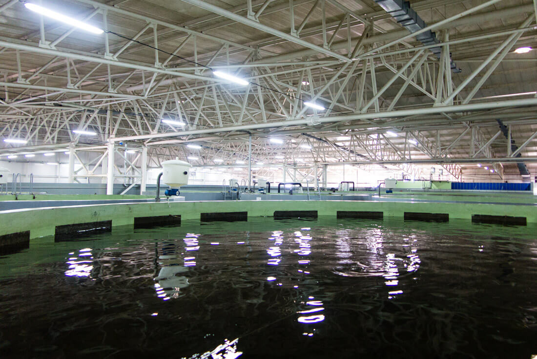 Large fish tanks in Aquatir factory, one of world's main producers of caviar.