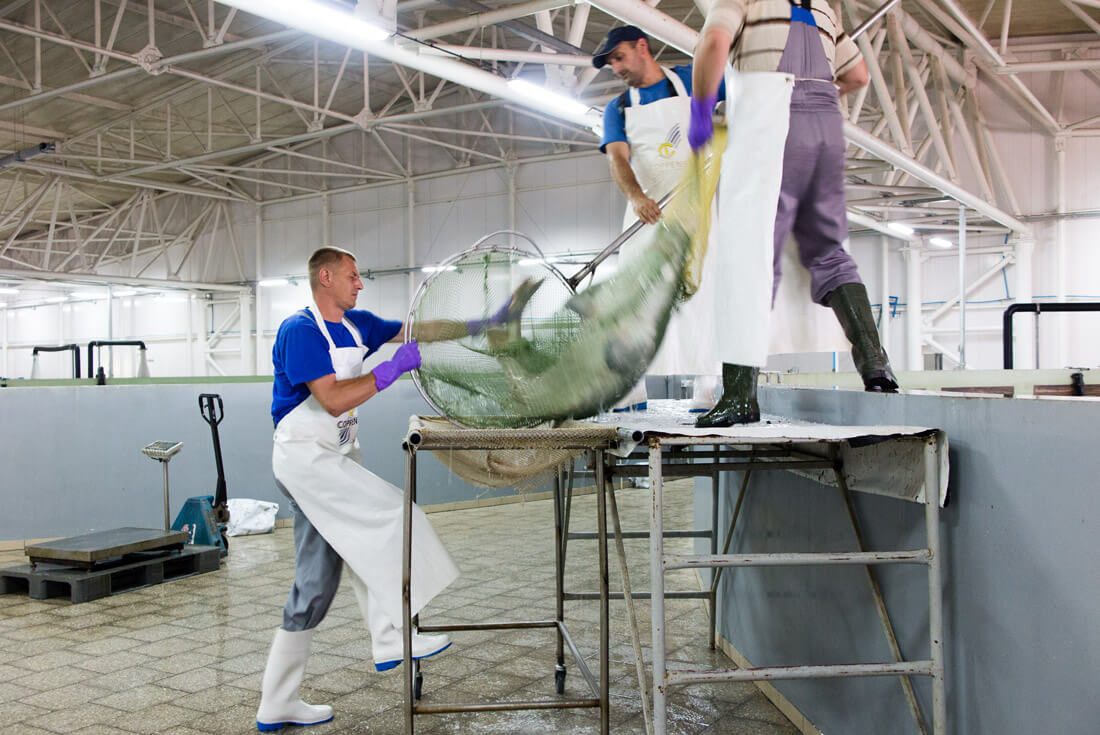 Catching of fish in Aquatir Factory, Tiraspol