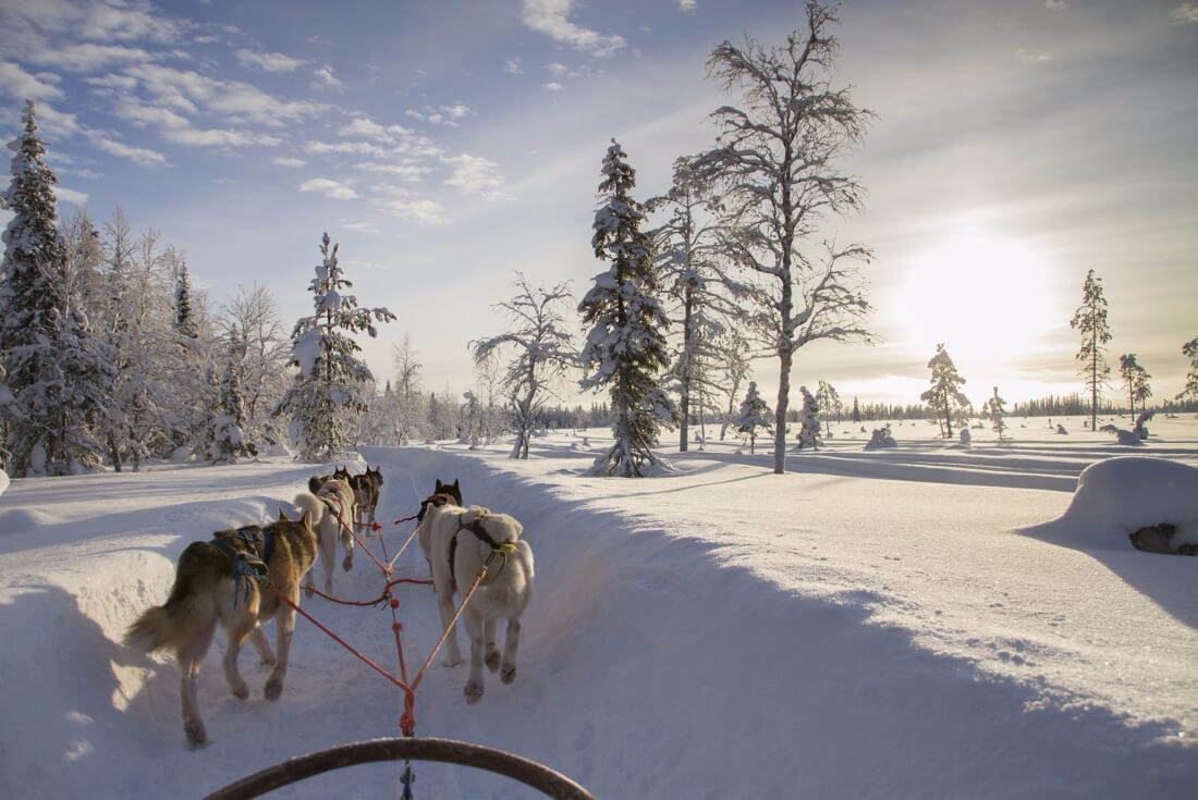 Husky safari is definitely one of Lapland Finland's must things to do