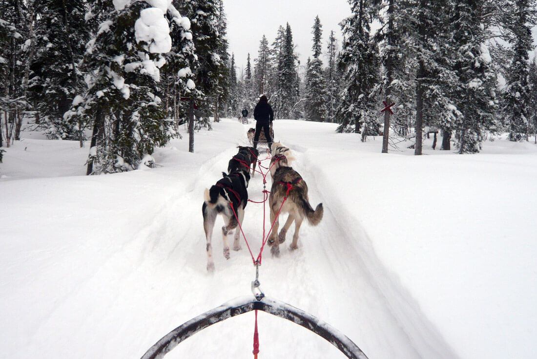 Husky dogsled winter adventure in Lapland Finland