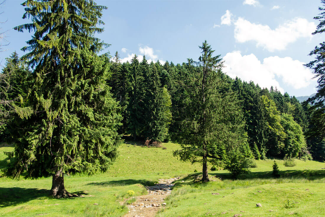 Pristine nature in the mountains of Piatra Mare, Romania
