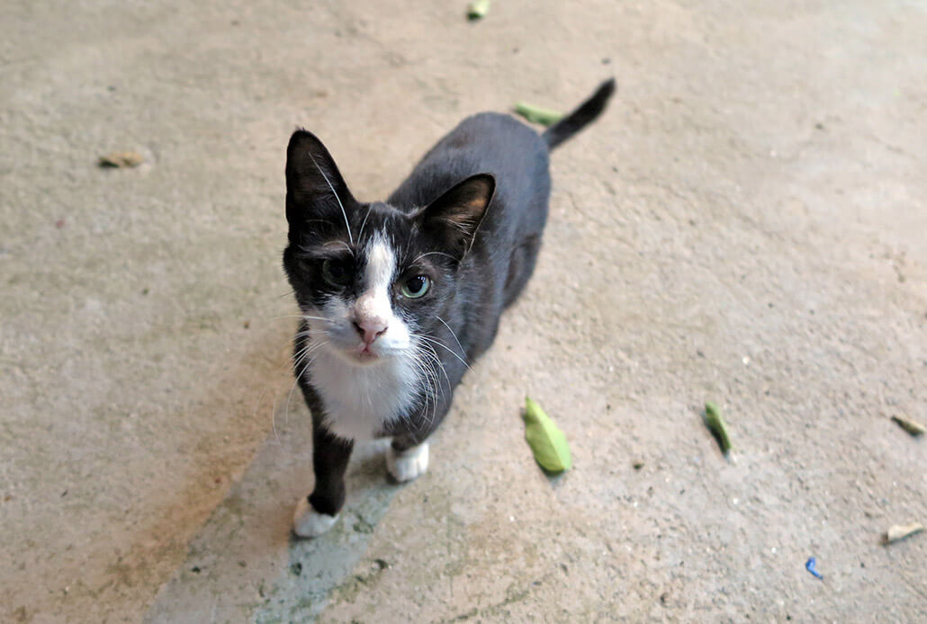 Things to do Koh Lanta: Help stray cats and dogs