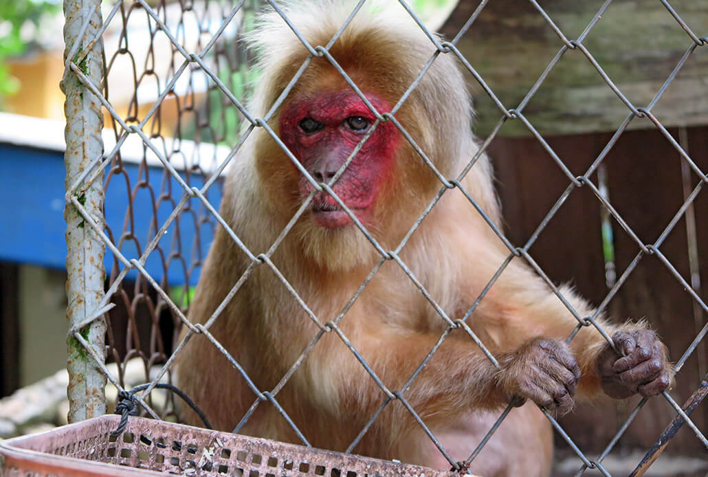 Sad monkey in Lanta Sang Kha Ao Nature Resort & Spa