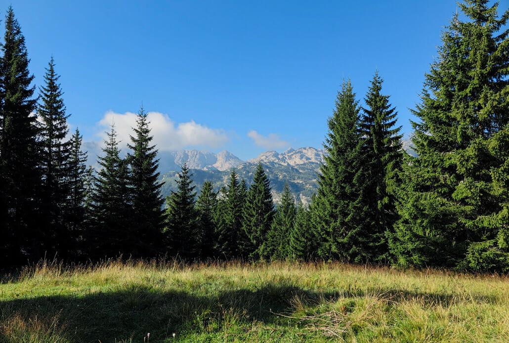 Forest in Durmitor National Park Montenegro