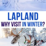 Winter images with a reindeer with text overlay: Lapland Why visit in winter?