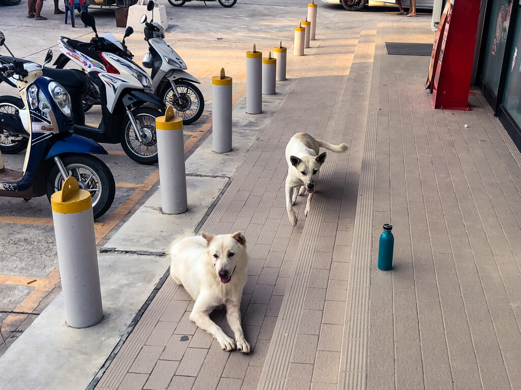 Stray dogs in front of a store