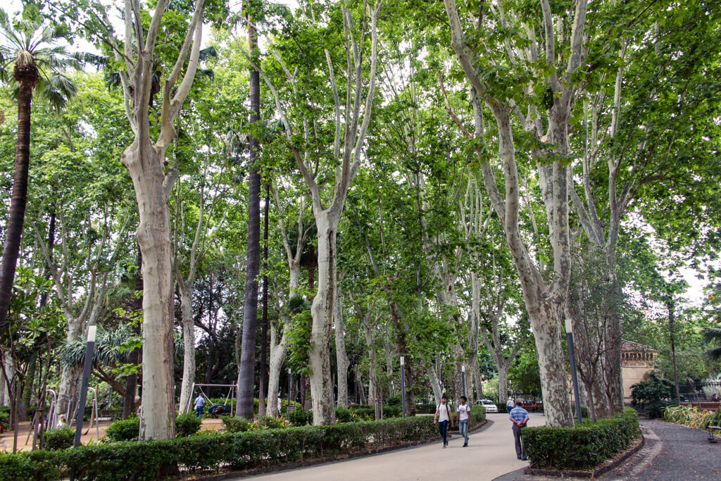 Tall trees in a park in Catania Sicily