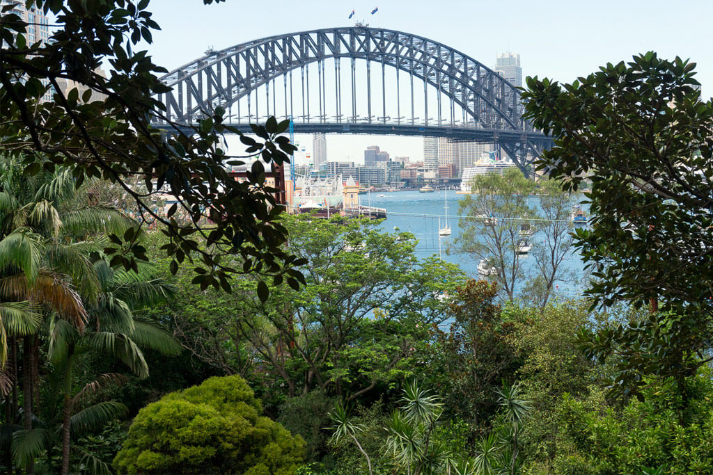 View of Sydney's Harbour Bridge from behind trees
