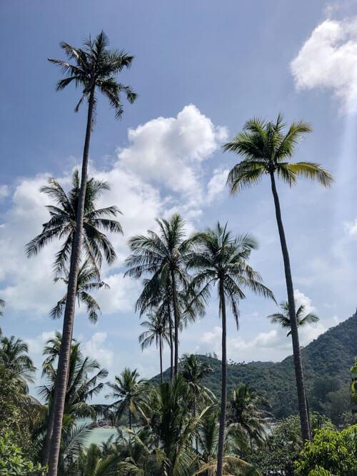 High palm trees near a beach, Bottle Beach, Koh Phangan