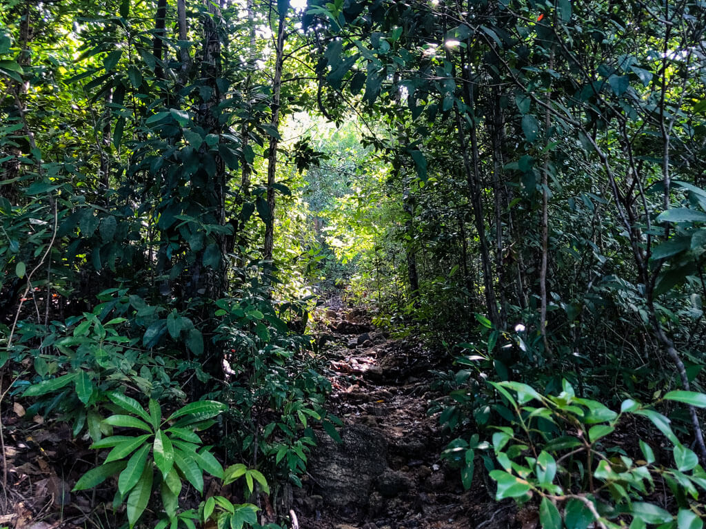 A path in the jungle of Koh Phangan Thailand