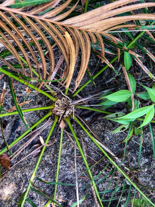 Plants in Koh Phangan Thailand