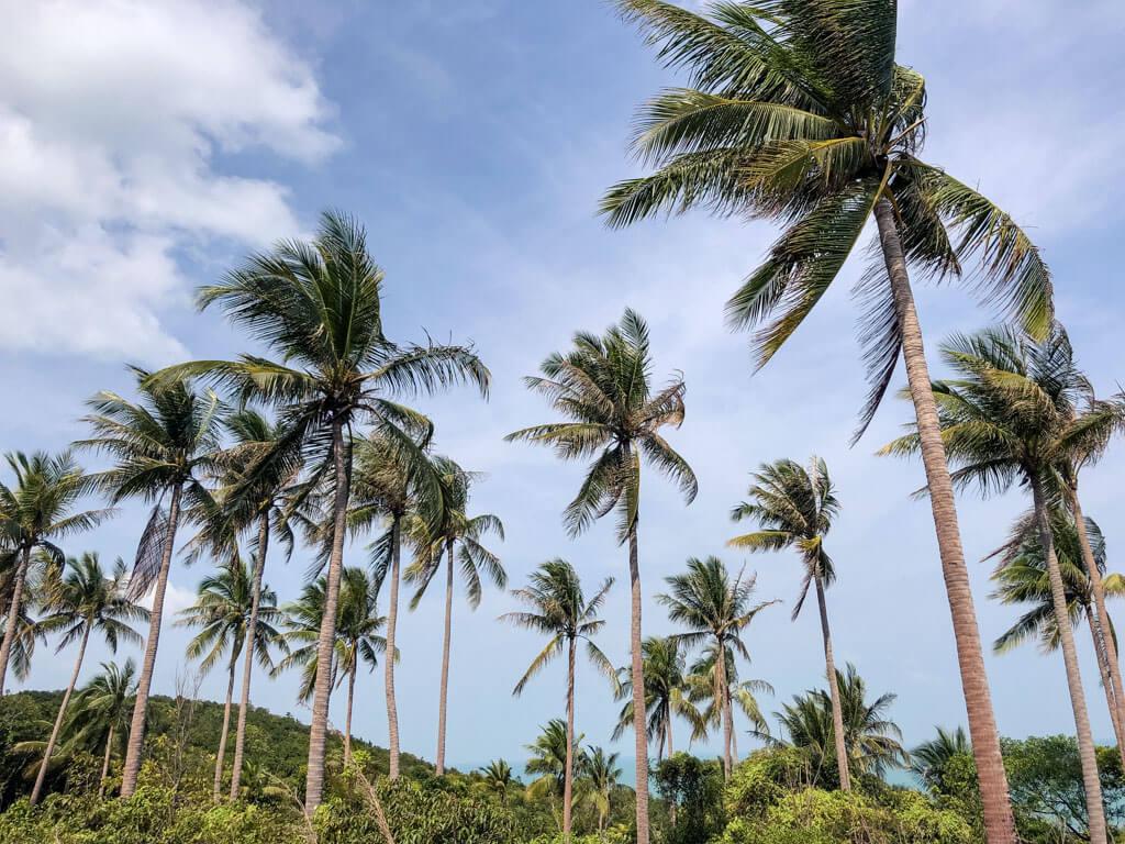 Coconut palms on a tropical island