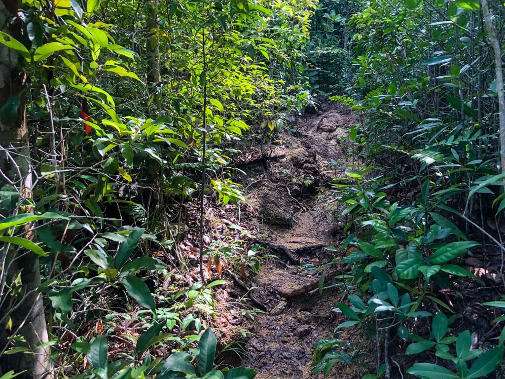 A hiking path in the jungle