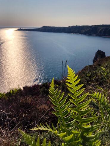Ferns on Emerald Coast Brittany France