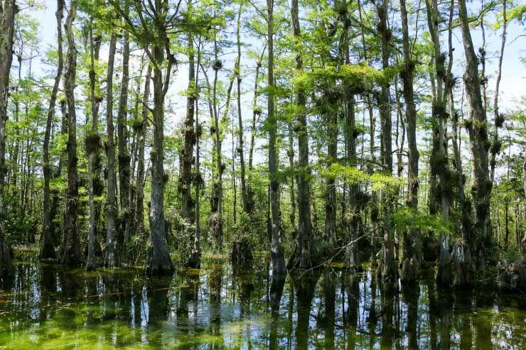 Everglades National Park FL