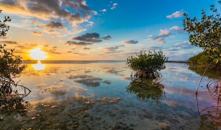 Mangroves in Key Largo FL