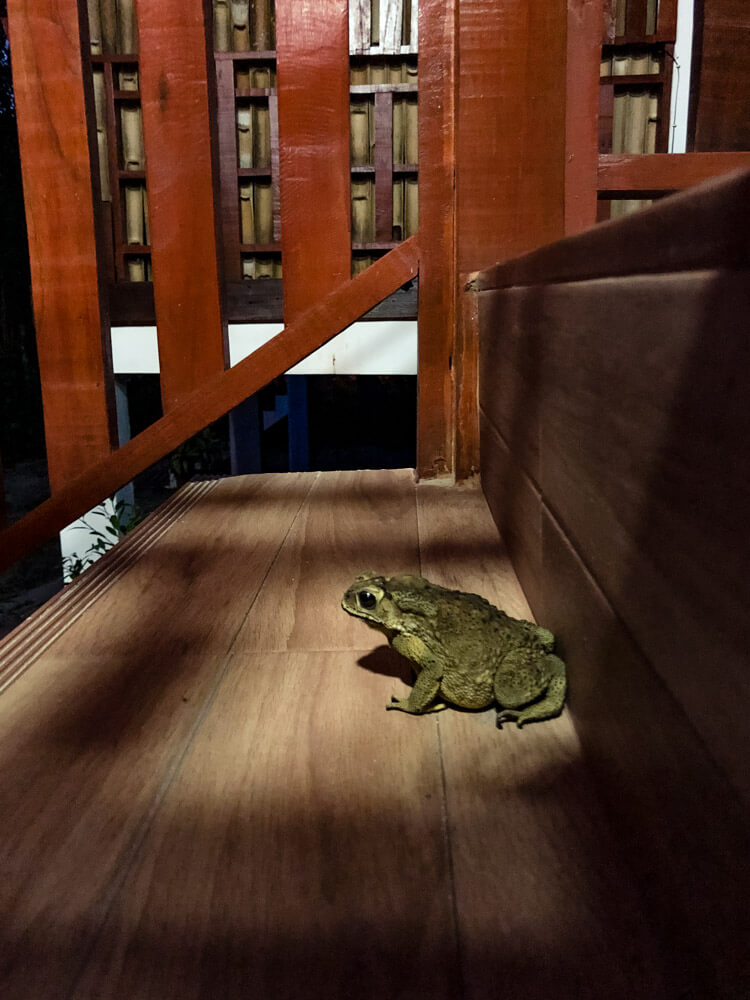 A profile view of a toad on a staircase