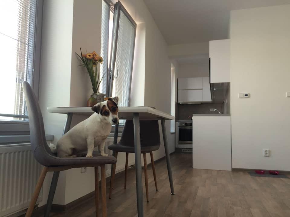 cute dog on a chair