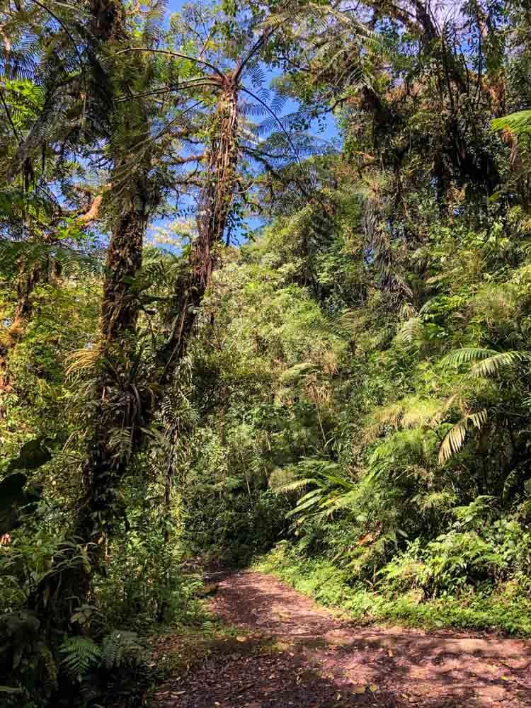 a path in a Costa Rica Reserve