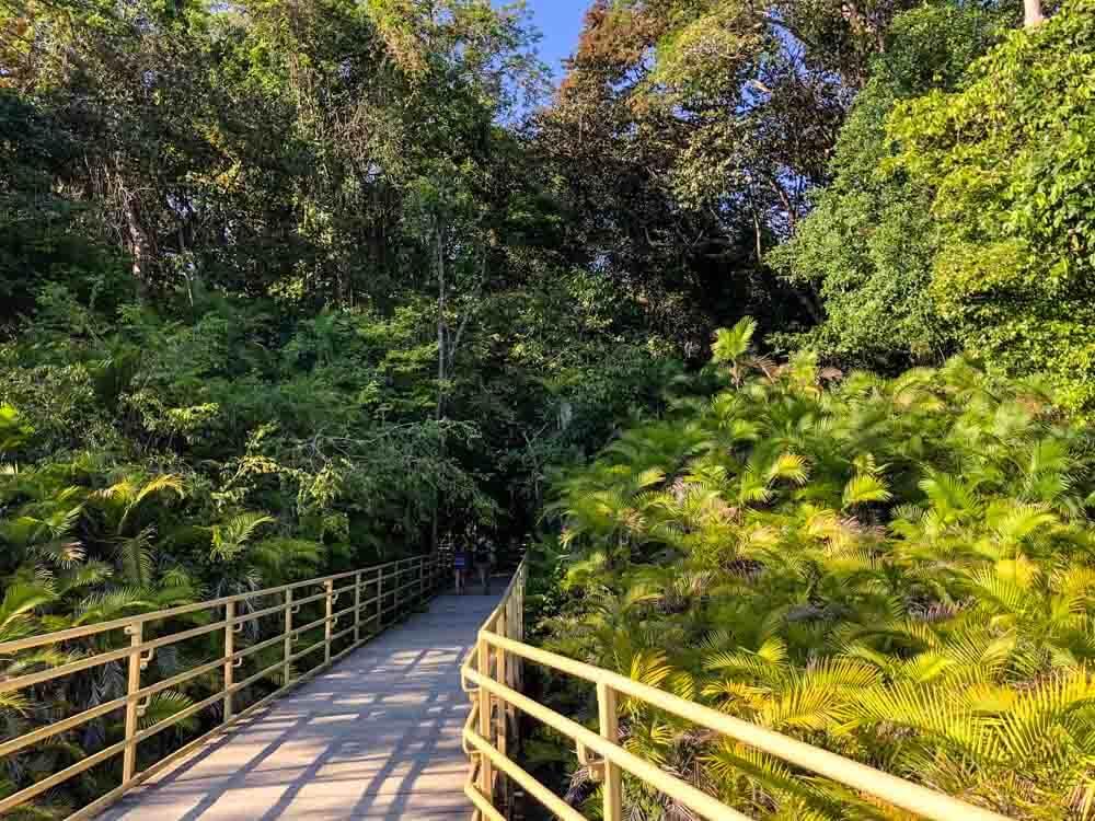 a trail leading through a lush tropical forest
