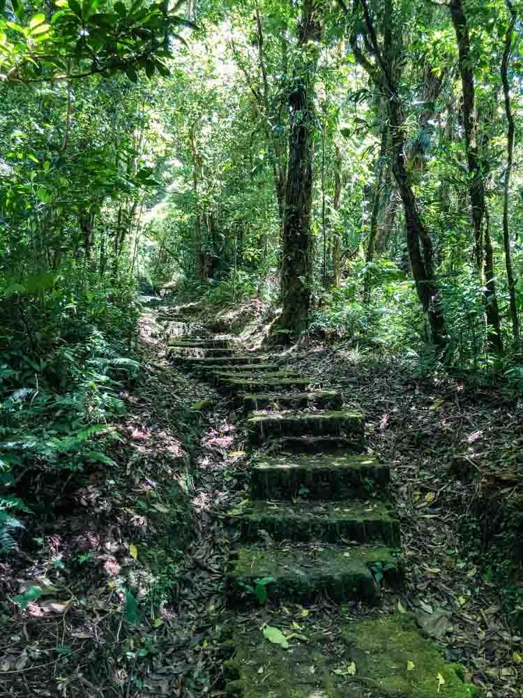 A path through greenery in a cloud forest in Costa Rica