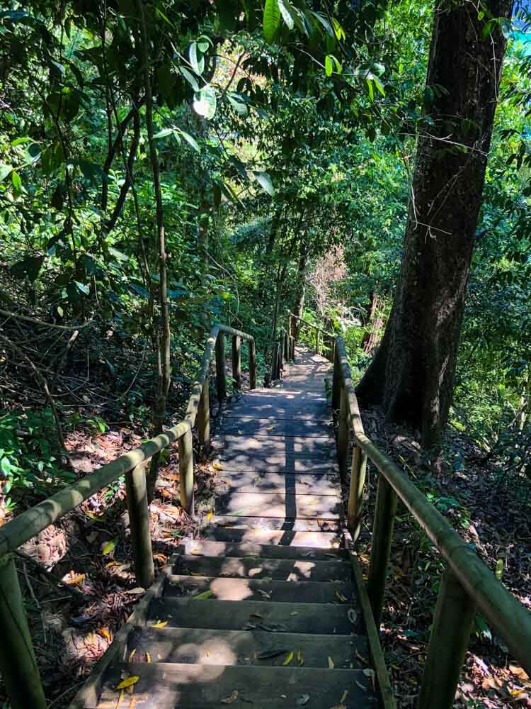 stairs leading down in a Costa Rica National Park